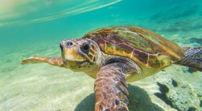 Nyugalmas hely lett a Zöld-foki-szigetek a teknősök számára