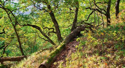 A holtfák és cserjék fontossága az erdőben