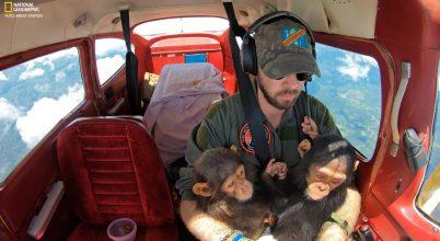 Csimpánzok és állatvédők: közös a remény