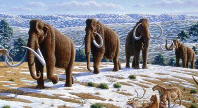 A klíma végzett a mamutokkal, nem az ember