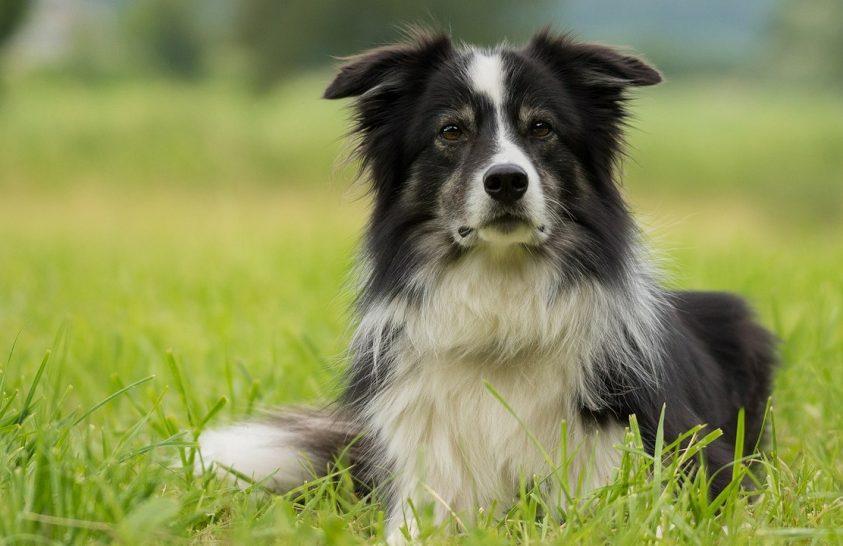 A világ legokosabb kutyáit vizsgálták az ELTE kutatói