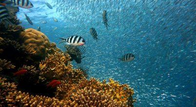 Egy évtized alatt a korallok 14 százaléka veszett el