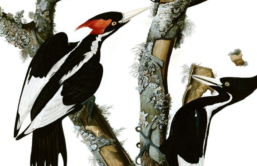 23 amerikai faj lekerül a védettek listájáról – kihalás miatt