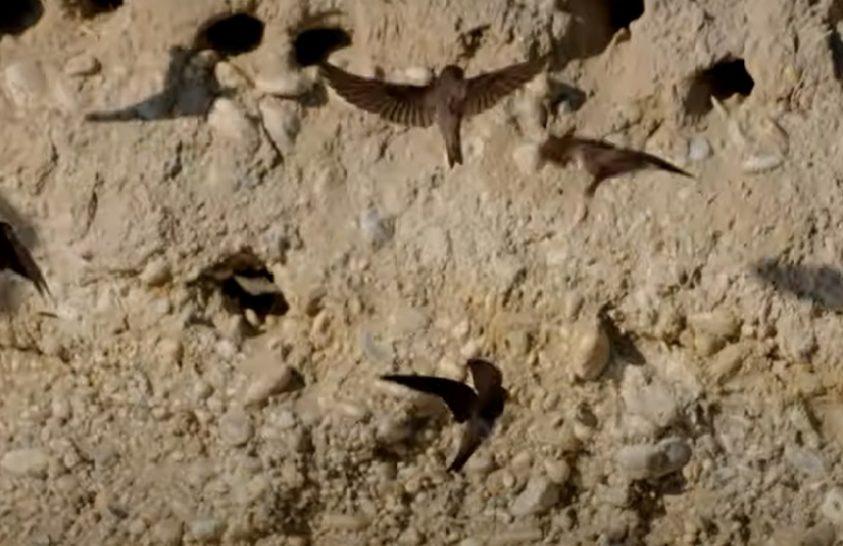 Partfalak egyik legkorábbi hódítói